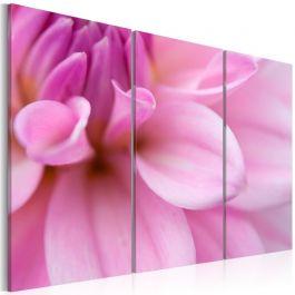 Πίνακας - Pink dahlia