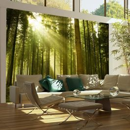 Φωτοταπετσαρία - Pine forest