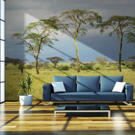 Φωτοταπετσαρία - Savanna trees