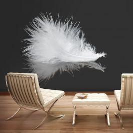 Φωτοταπετσαρία - White feather