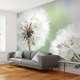 Φωτοταπετσαρία - Two dandelions