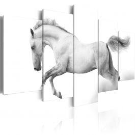 Πίνακας - Horse- passion and freedom