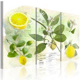 Πίνακας - Fruit: lemon