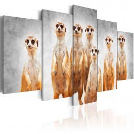 Πίνακας - Meerkats